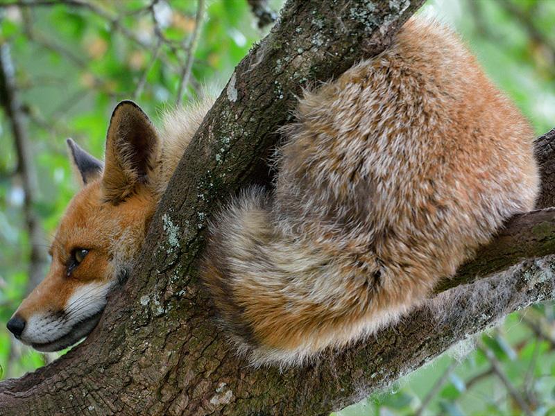 Visitez la région - Parc animalier de Gramat