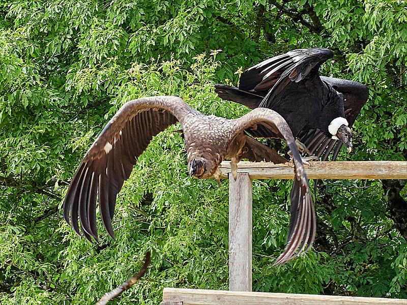 Visitez la région - Écoparc du Rocher des Aigles - Rocamadour